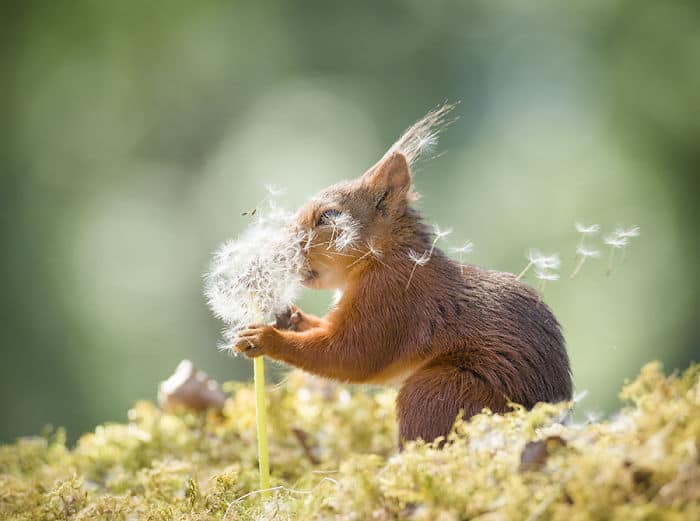 Red squirrel photograph by Geert Weggen Photography.