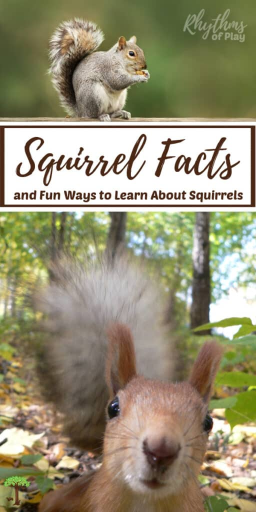 Learn all about squirrels