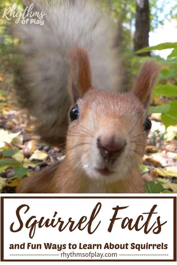 Squirrel facts with a squirrel peeking at YOU!