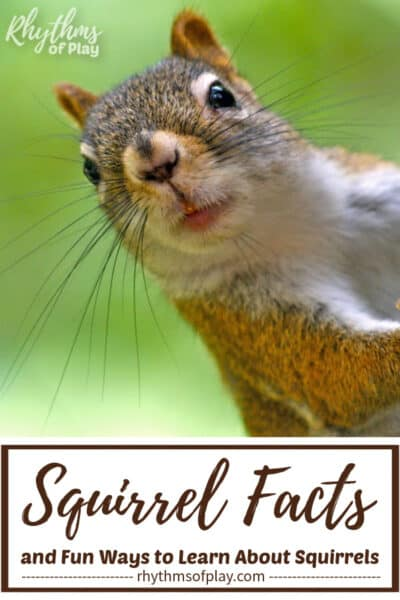 Squirrel Facts and Fun Ways to Learn All About Squirrels
