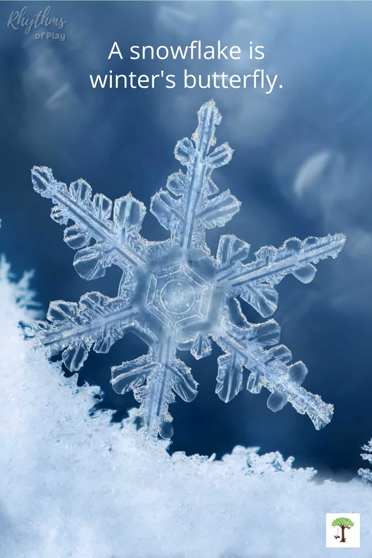 """closeup photo of a snowflake with quote """"A snowflake is winter's butterfly."""""""