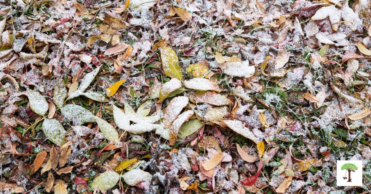first frost covering fallen autumn leaves green grass is a sign of winter
