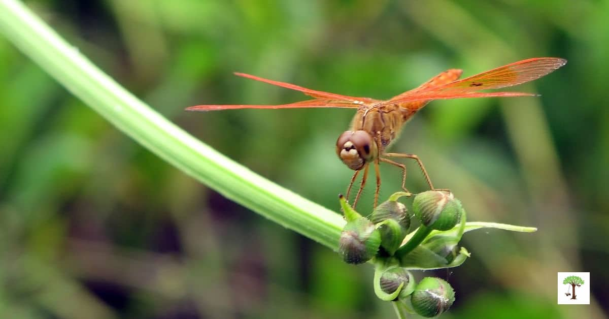 An orange dragonfly is a sign that summer has arrived in this scavenger hunt for kids.